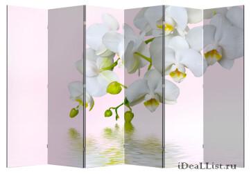 "Ширма ""Орхидея 1"" 6"